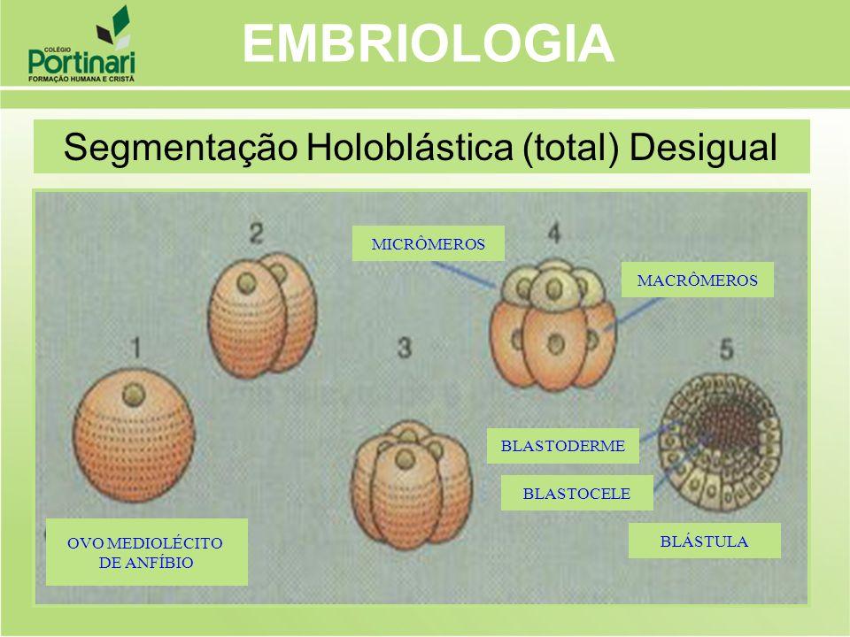 EMBRIOLOGIA Segmentação Holoblástica (total) Desigual MICRÔMEROS