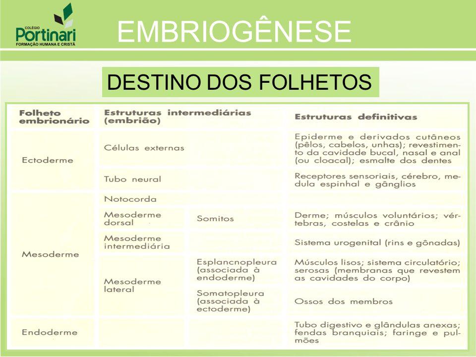 EMBRIOGÊNESE DESTINO DOS FOLHETOS