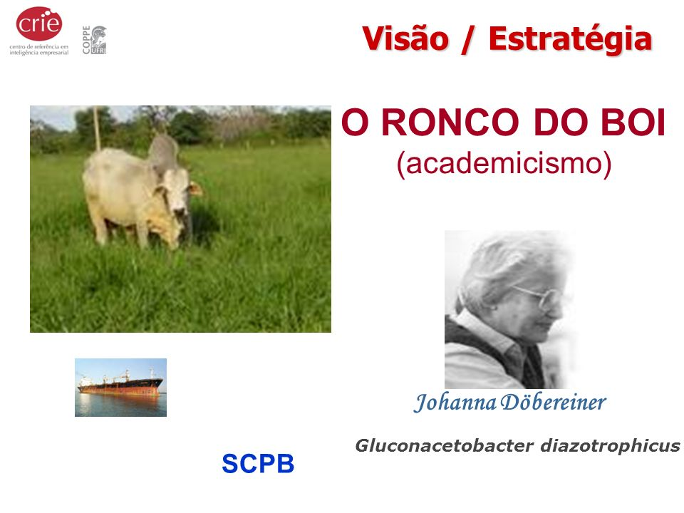 O RONCO DO BOI (academicismo)