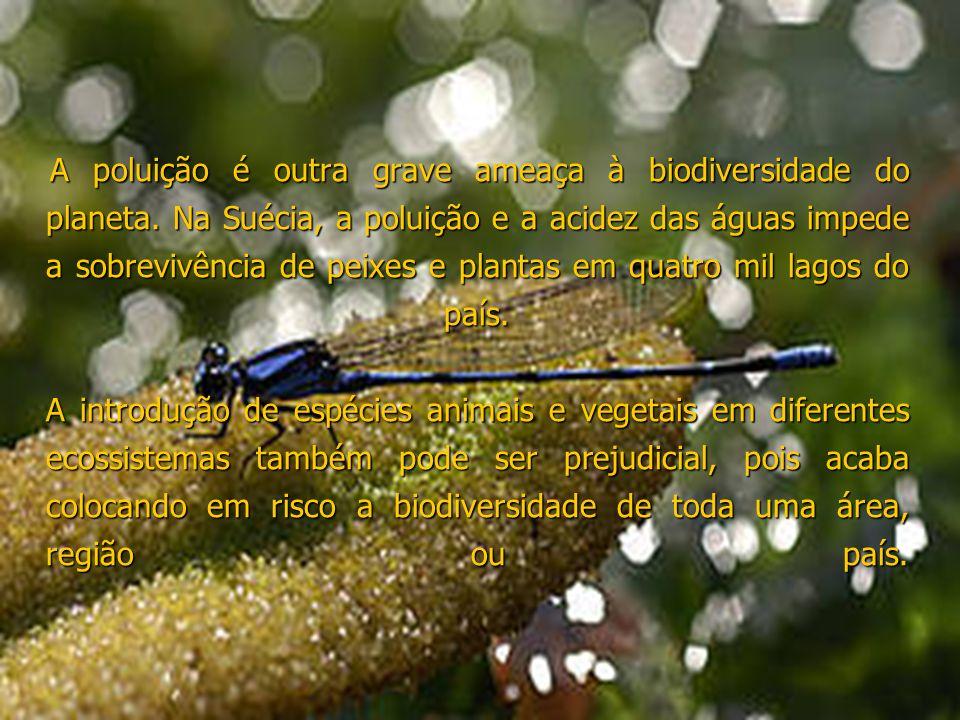 A poluição é outra grave ameaça à biodiversidade do planeta