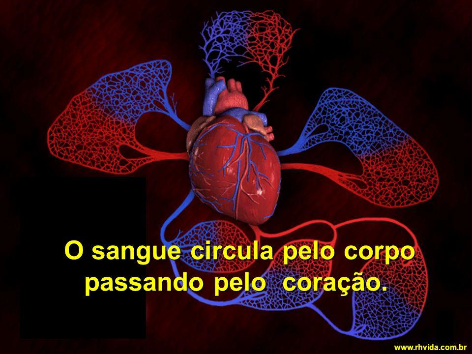 O sangue circula pelo corpo passando pelo coração.