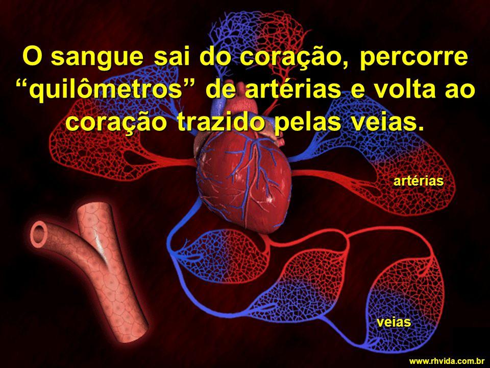 O sangue sai do coração, percorre quilômetros de artérias e volta ao coração trazido pelas veias.