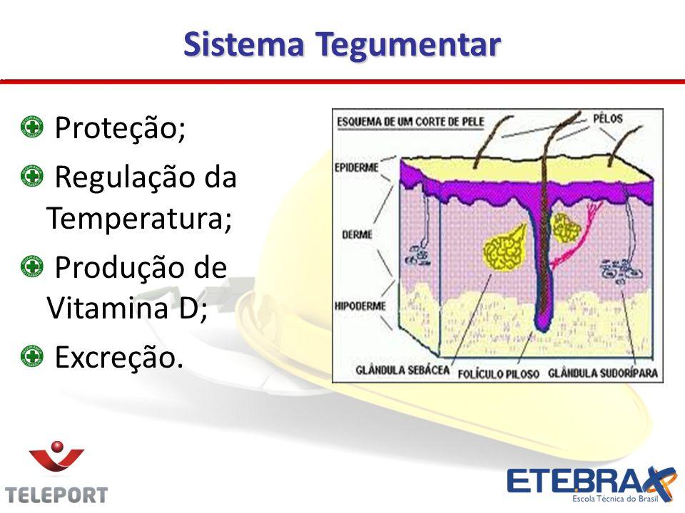 Sistema Tegumentar Proteção; Regulação da Temperatura;