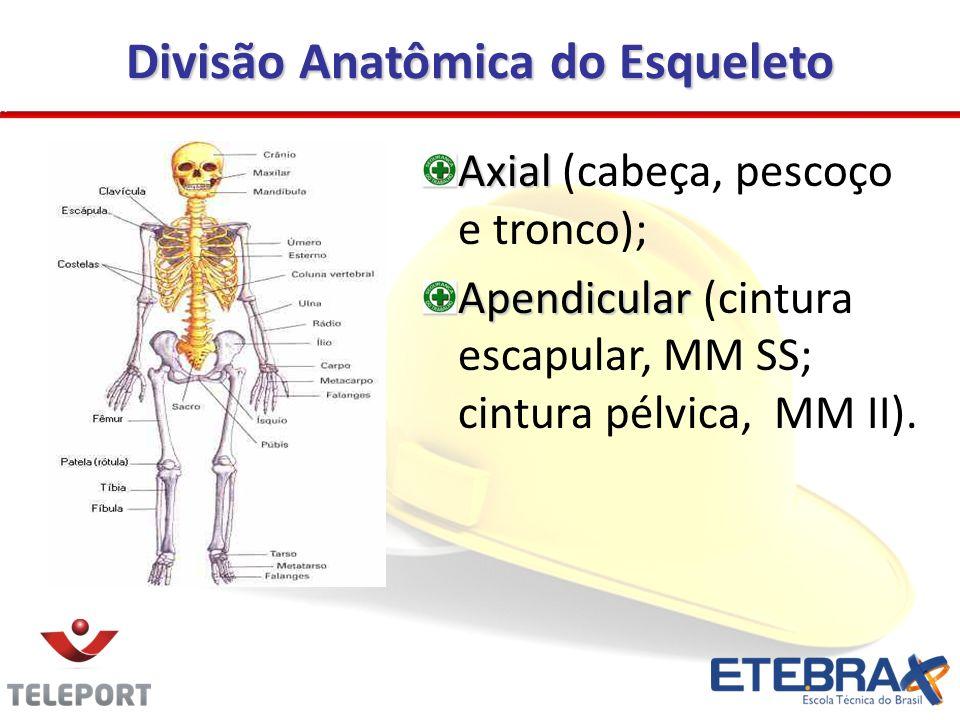 Divisão Anatômica do Esqueleto