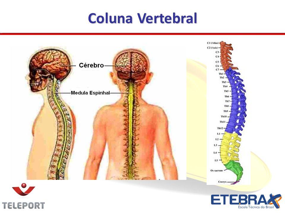 Coluna Vertebral 16
