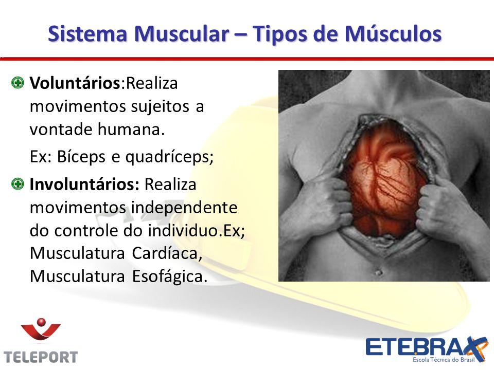Sistema Muscular – Tipos de Músculos