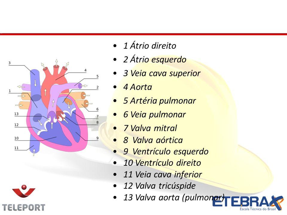 Coração - Anexos 1 Átrio direito 2 Átrio esquerdo 3 Veia cava superior