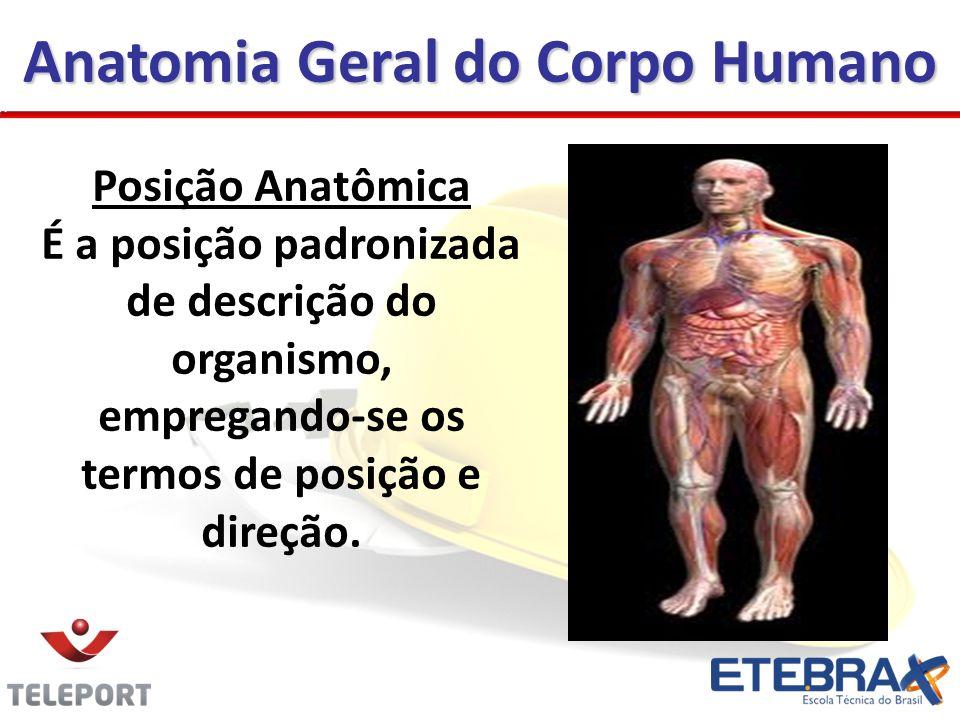 Anatomia Geral do Corpo Humano