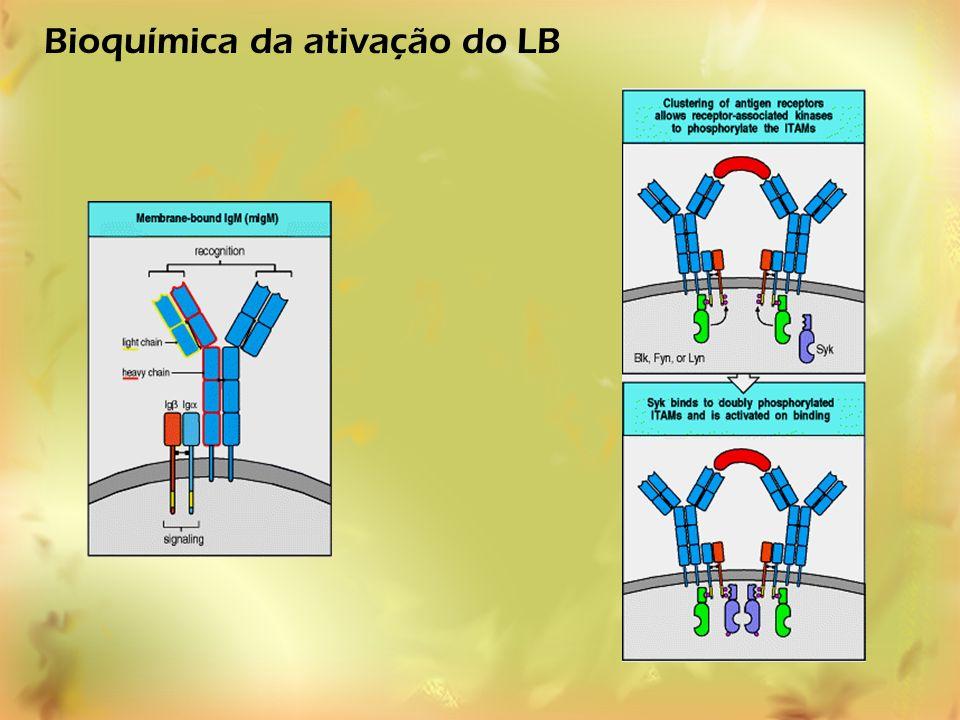 Bioquímica da ativação do LB