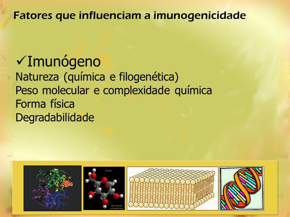 Imunógeno Fatores que influenciam a imunogenicidade