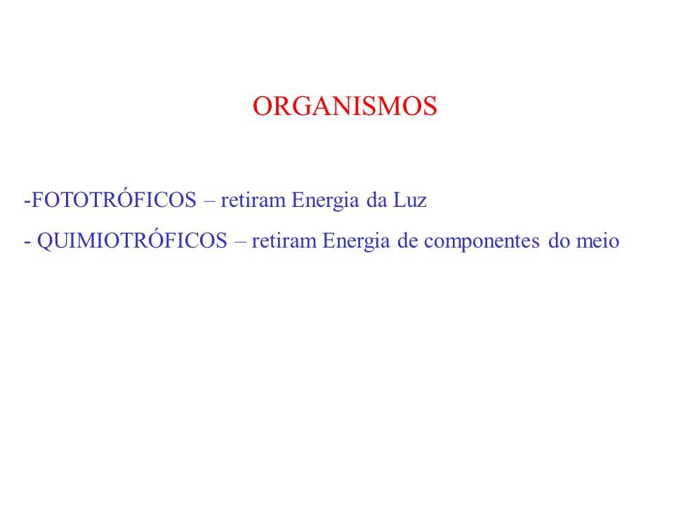 ORGANISMOS FOTOTRÓFICOS – retiram Energia da Luz