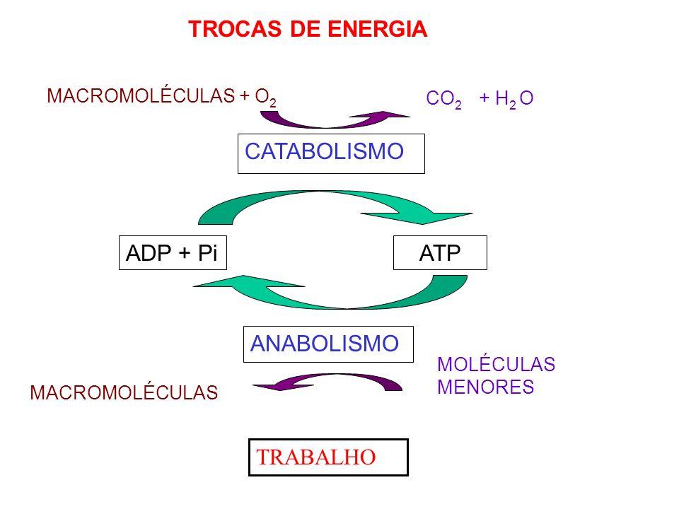TROCAS DE ENERGIA CATABOLISMO ADP + Pi ATP ANABOLISMO TRABALHO