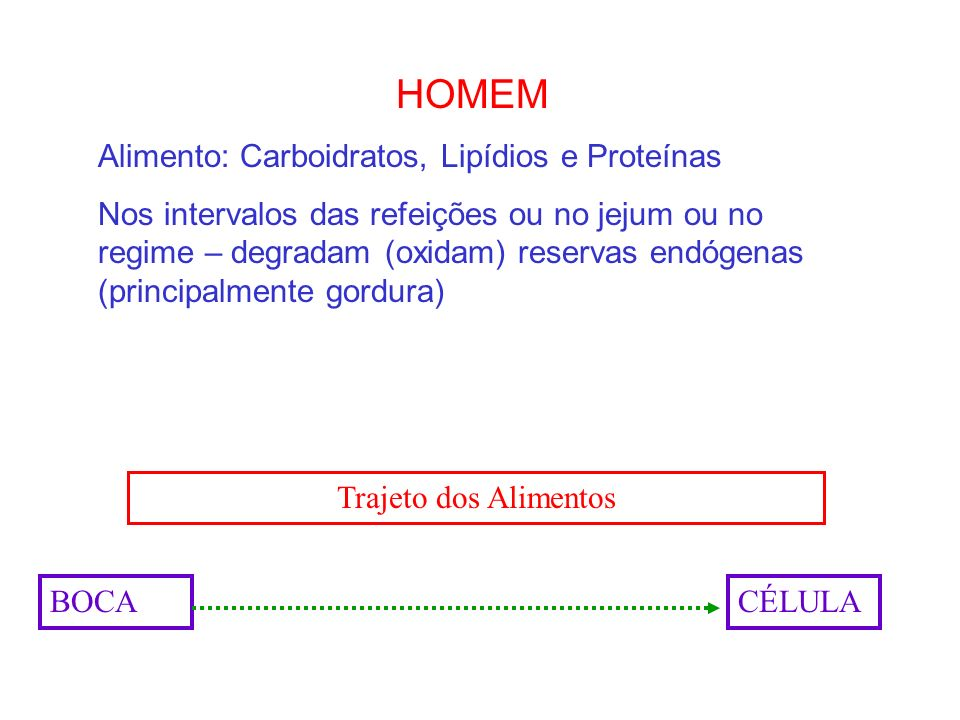 HOMEM Alimento: Carboidratos, Lipídios e Proteínas