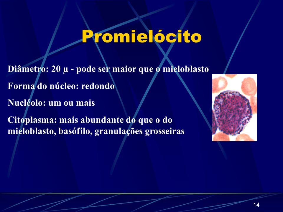 Promielócito Diâmetro: 20 µ - pode ser maior que o mieloblasto