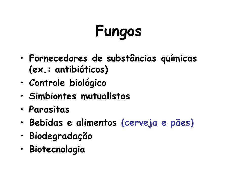 Fungos Fornecedores de substâncias químicas (ex.: antibióticos)