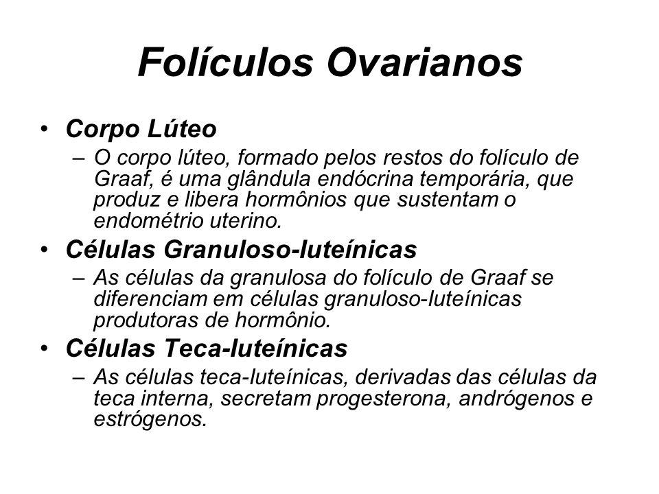 Folículos Ovarianos Corpo Lúteo Células Granuloso-Iuteínicas