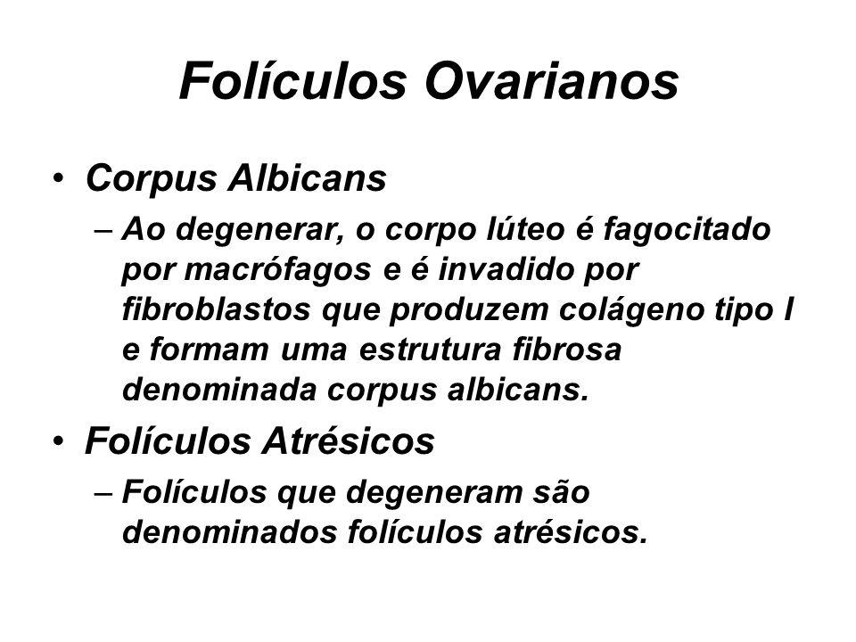 Folículos Ovarianos Corpus Albicans Folículos Atrésicos