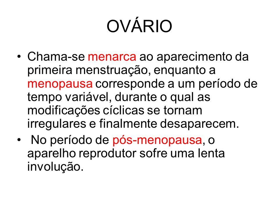 OVÁRIO