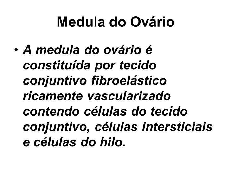 Medula do Ovário