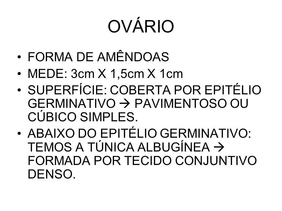 OVÁRIO FORMA DE AMÊNDOAS MEDE: 3cm X 1,5cm X 1cm