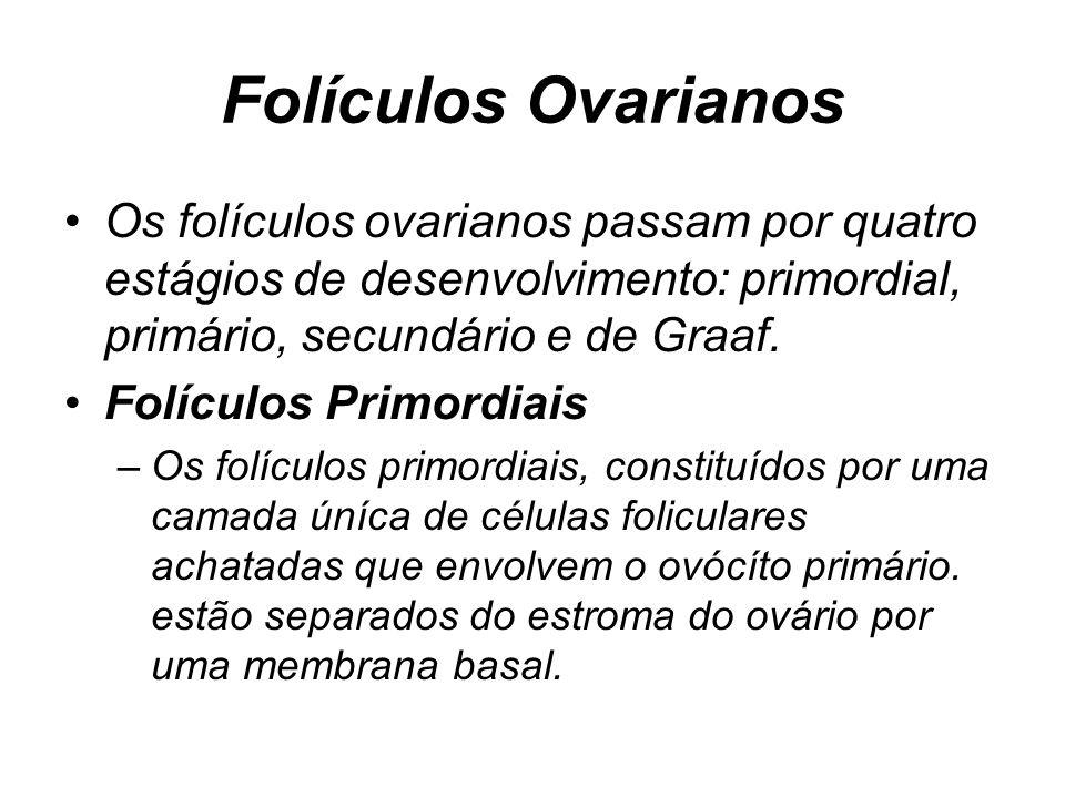 Folículos Ovarianos Os folículos ovarianos passam por quatro estágios de desenvolvimento: primordial, primário, secundário e de Graaf.