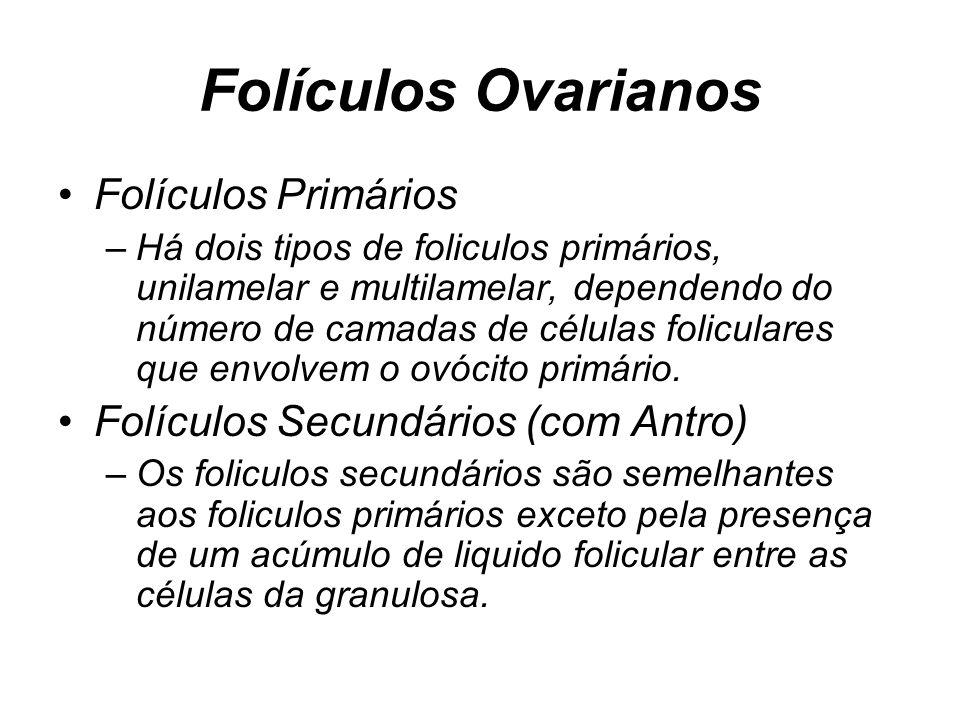 Folículos Ovarianos Folículos Primários