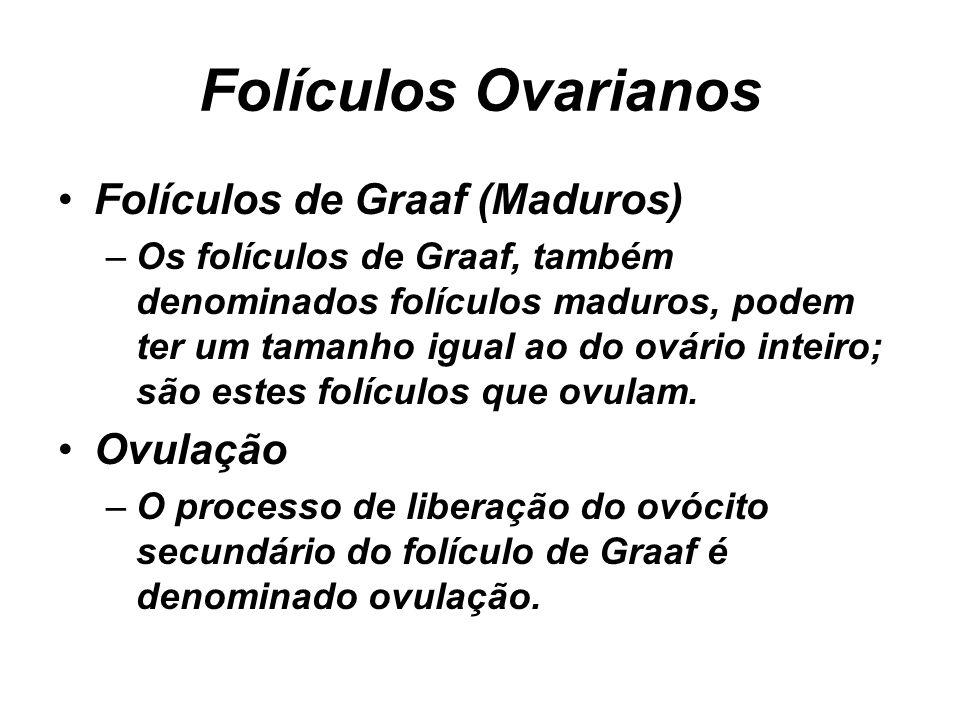 Folículos Ovarianos Folículos de Graaf (Maduros) Ovulação