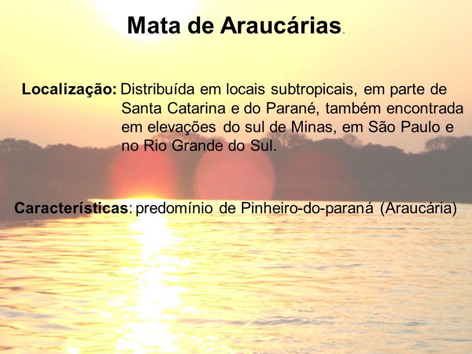 Mata de Araucárias. Localização: Distribuída em locais subtropicais, em parte de. Santa Catarina e do Parané, também encontrada.