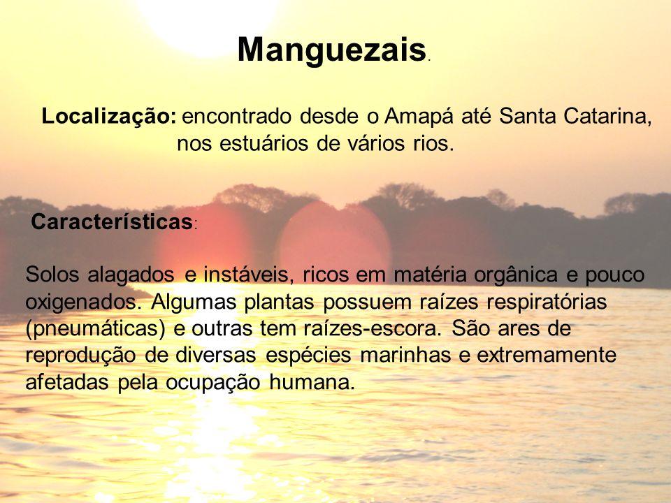 Manguezais. Localização: encontrado desde o Amapá até Santa Catarina,
