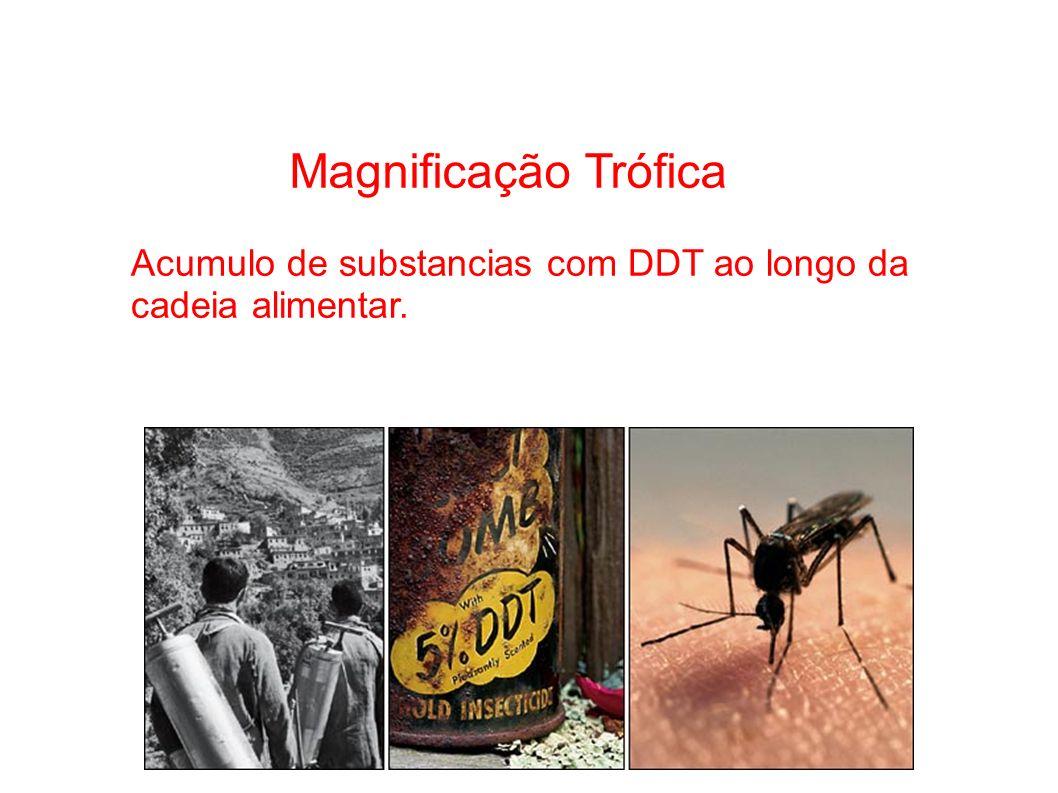 Magnificação Trófica. Acumulo de substancias com DDT ao longo da cadeia alimentar. 23