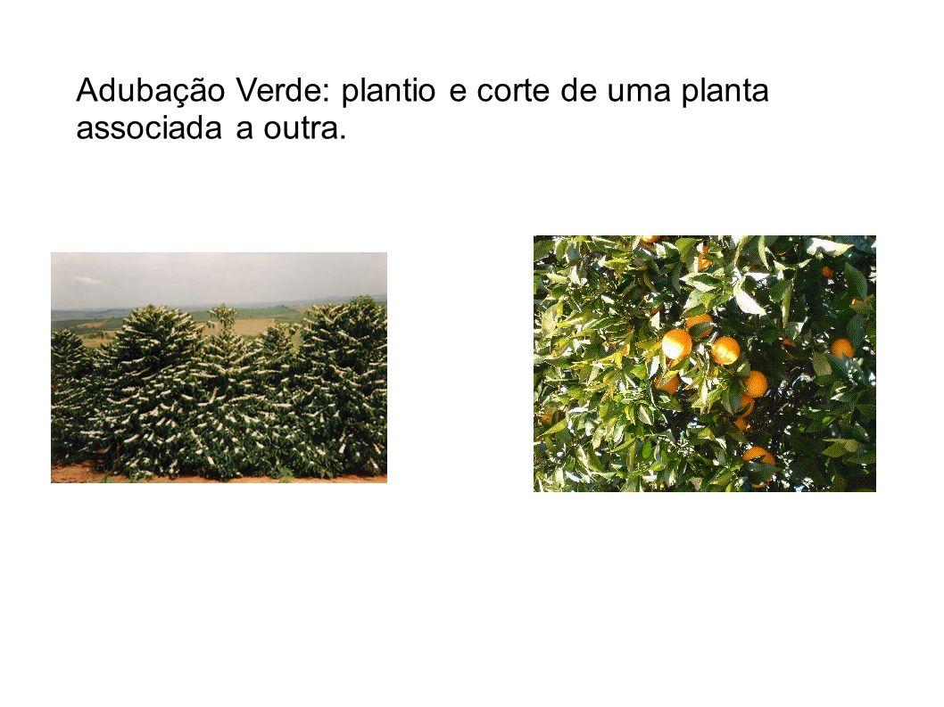 Adubação Verde: plantio e corte de uma planta associada a outra.