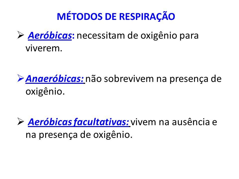 MÉTODOS DE RESPIRAÇÃO Aeróbicas: necessitam de oxigênio para viverem. Anaeróbicas: não sobrevivem na presença de oxigênio.