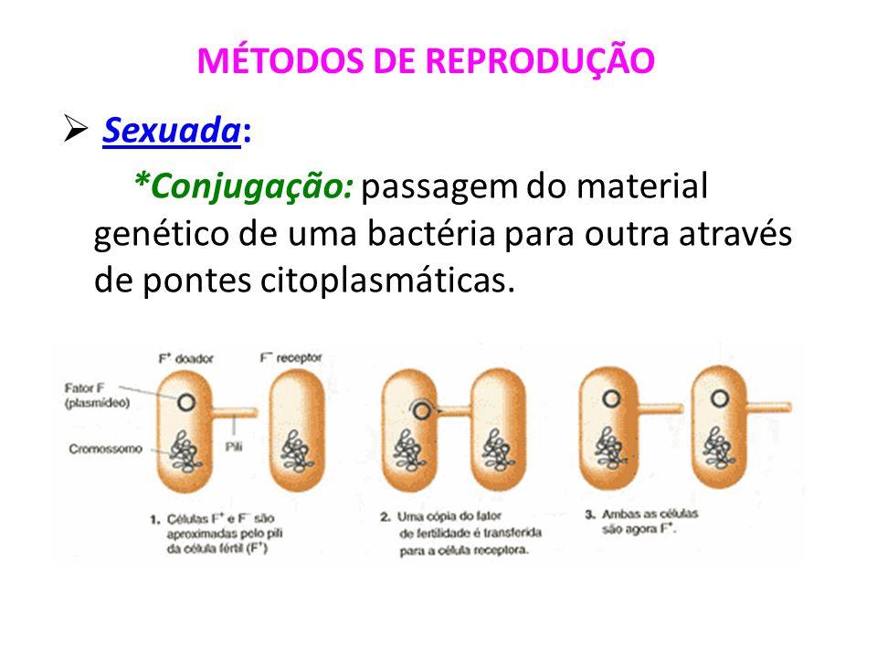 MÉTODOS DE REPRODUÇÃOSexuada: *Conjugação: passagem do material genético de uma bactéria para outra através de pontes citoplasmáticas.