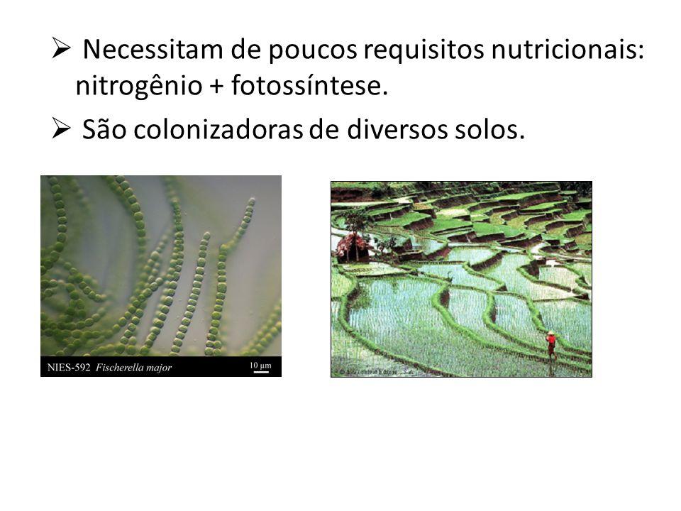 Necessitam de poucos requisitos nutricionais: nitrogênio + fotossíntese.