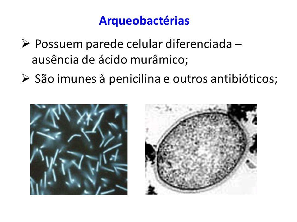 ArqueobactériasPossuem parede celular diferenciada – ausência de ácido murâmico; São imunes à penicilina e outros antibióticos;