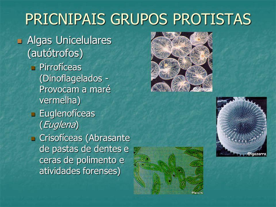 PRICNIPAIS GRUPOS PROTISTAS