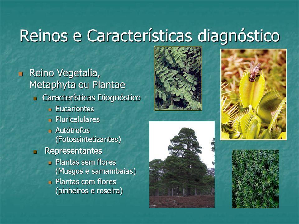 Reinos e Características diagnóstico