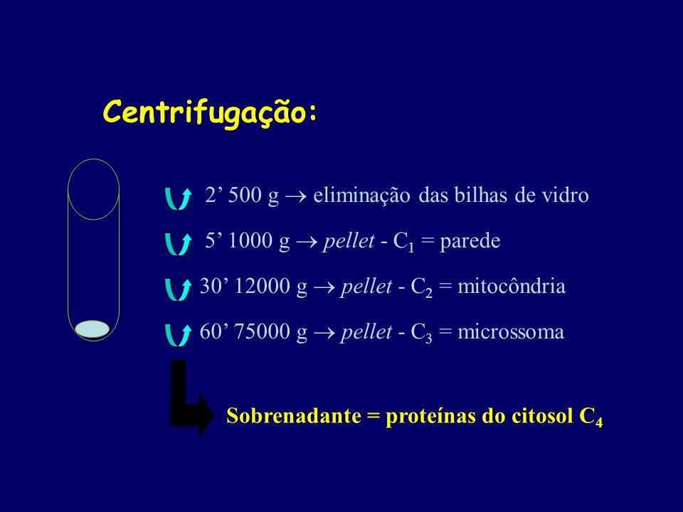 Centrifugação: 2' 500 g  eliminação das bilhas de vidro