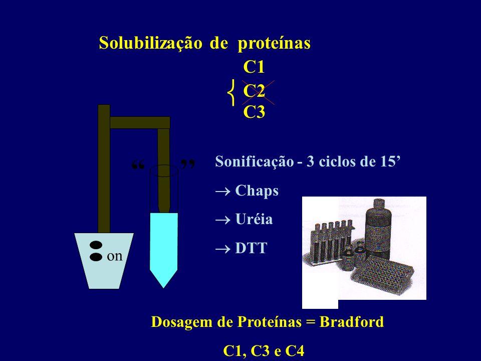 ''  Solubilização de proteínas C1 C3 C2