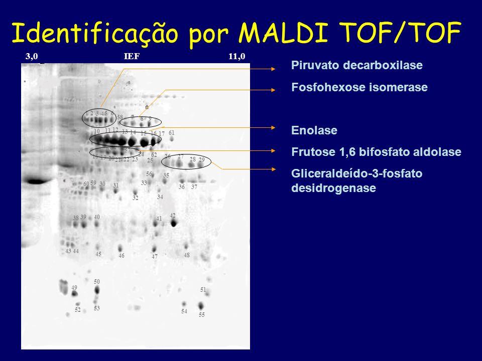 Identificação por MALDI TOF/TOF