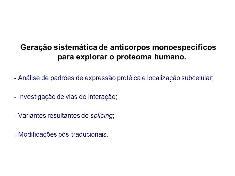 Geração sistemática de anticorpos monoespecíficos para explorar o proteoma humano.