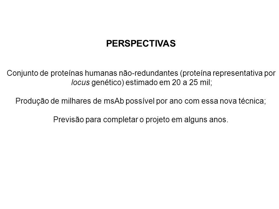PERSPECTIVAS Conjunto de proteínas humanas não-redundantes (proteína representativa por. locus genético) estimado em 20 a 25 mil;