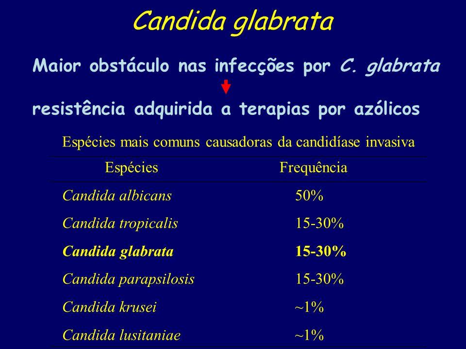 Candida glabrata Maior obstáculo nas infecções por C. glabrata