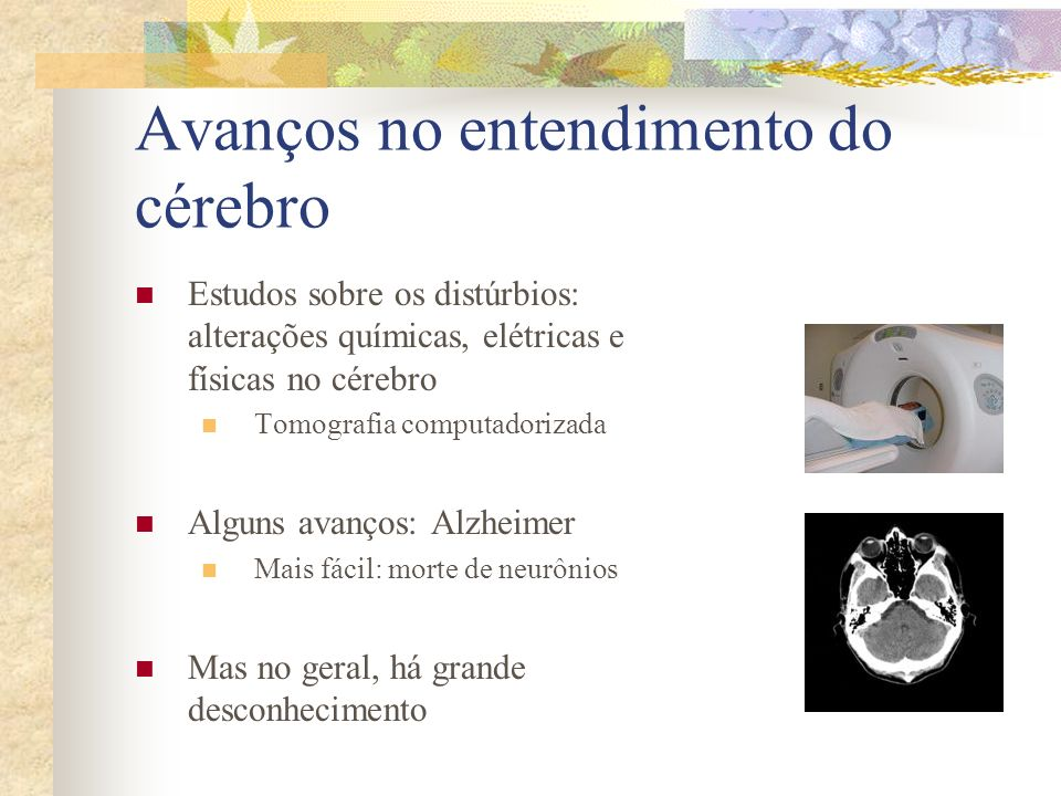 Avanços no entendimento do cérebro