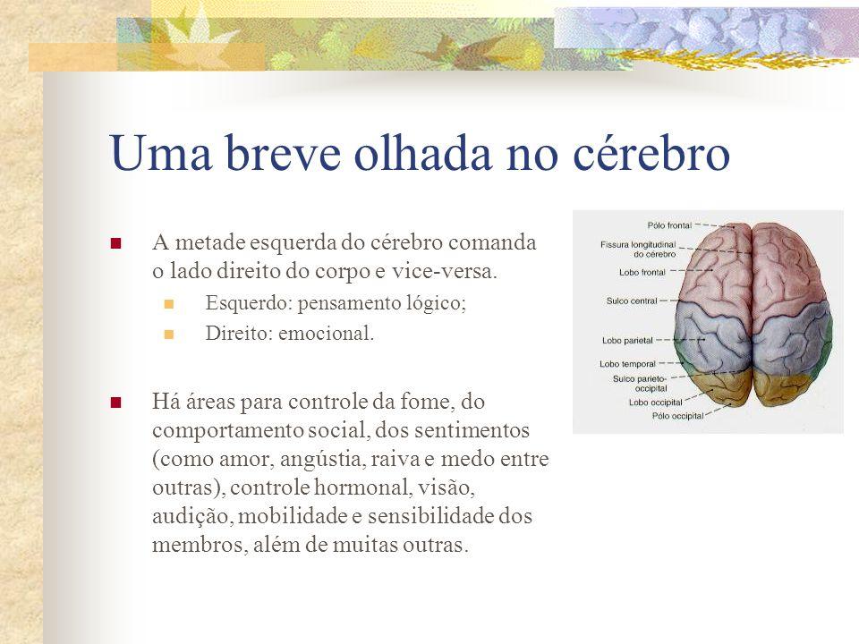 Uma breve olhada no cérebro