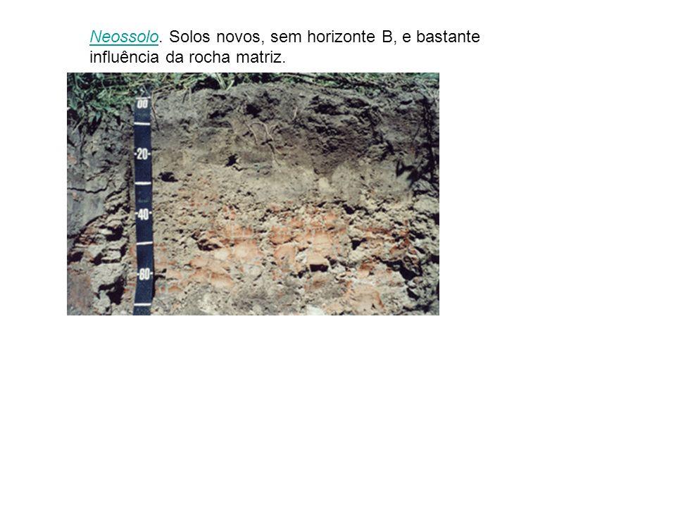 Neossolo. Solos novos, sem horizonte B, e bastante influência da rocha matriz.