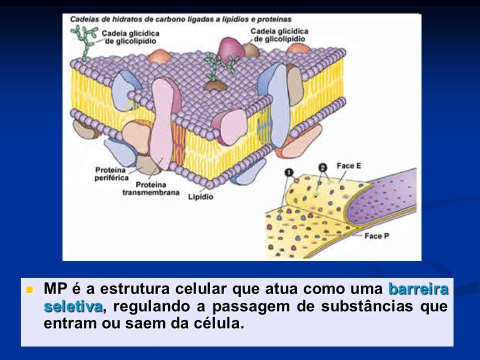 MP é a estrutura celular que atua como uma barreira seletiva, regulando a passagem de substâncias que entram ou saem da célula.