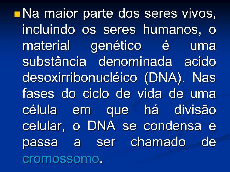 Na maior parte dos seres vivos, incluindo os seres humanos, o material genético é uma substância denominada acido desoxirribonucléico (DNA).