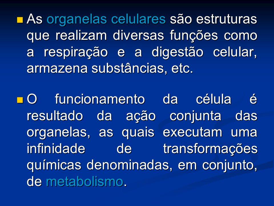 As organelas celulares são estruturas que realizam diversas funções como a respiração e a digestão celular, armazena substâncias, etc.