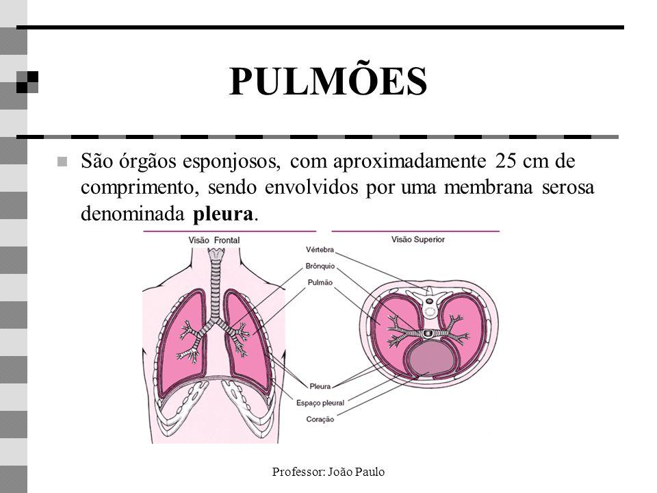 PULMÕES São órgãos esponjosos, com aproximadamente 25 cm de comprimento, sendo envolvidos por uma membrana serosa denominada pleura.
